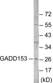 Cell Death GADD153 Colorimetric Cell-Based ELISA