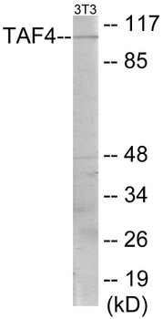Immunology TAF4 Colorimetric Cell-Based ELISA