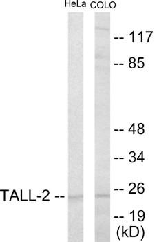 Immunology TALL-2 Colorimetric Cell-Based ELISA
