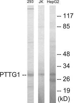 Cell Cycle ELISA Kits PTTG1 Colorimetric Cell-Based ELISA