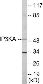 IP3KA Colorimetric Cell-Based ELISA