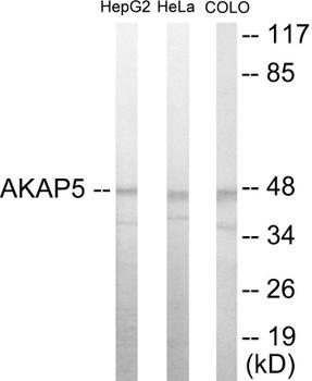 AKAP5 Colorimetric Cell-Based ELISA