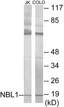 NBL1 Colorimetric Cell-Based ELISA