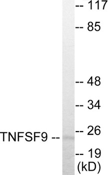 TNFSF9 Colorimetric Cell-Based ELISA