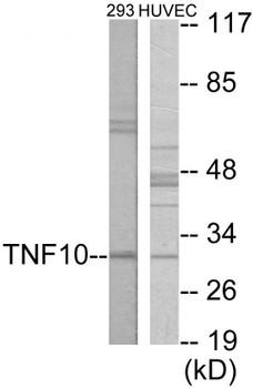 Cell Death CD253 Colorimetric Cell-Based ELISA