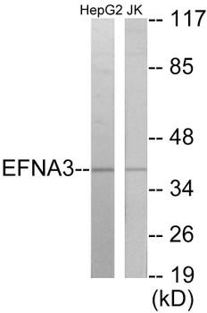 EFNA3 Colorimetric Cell-Based ELISA
