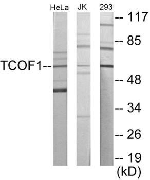 TCOF1 Colorimetric Cell-Based ELISA