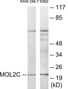MOL2C Colorimetric Cell-Based ELISA