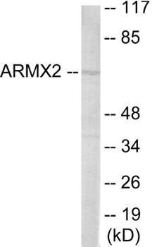 ARMCX2 Colorimetric Cell-Based ELISA