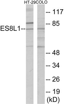 ES8L1 Colorimetric Cell-Based ELISA