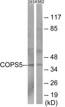 COPS5 Colorimetric Cell-Based ELISA