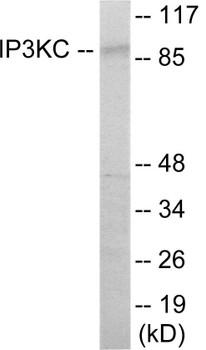IP3KC Colorimetric Cell-Based ELISA