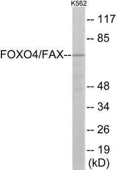 Cell Cycle ELISA Kits AFX Colorimetric Cell-Based ELISA