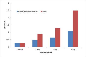 AML1 Phospho-Ser303 Transcription Factor Activity Assay
