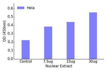 AML1 Phospho-Ser435 Transcription Factor Activity Assay