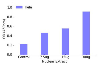 MEF2A Phospho-Ser408 Transcription Factor Activity Assay