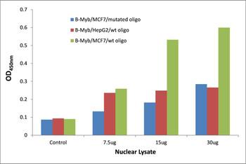 B-Myb Transcription Factor Activity Assay
