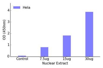 CREB Transcription Factor Activity Assay