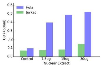 ELF5 Transcription Factor Activity Assay