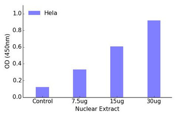 FOXH1 Transcription Factor Activity Assay