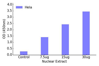 FOXL1 Transcription Factor Activity Assay