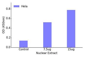 FOXO1A Transcription Factor Activity Assay