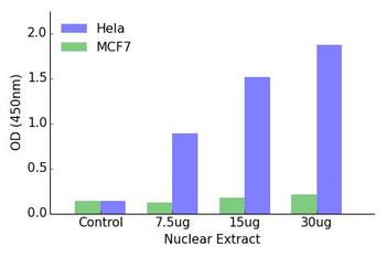 GR Transcription Factor Activity Assay