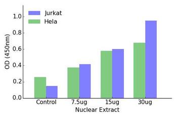 HOXA1/B1/D1 Transcription Factor Activity Assay