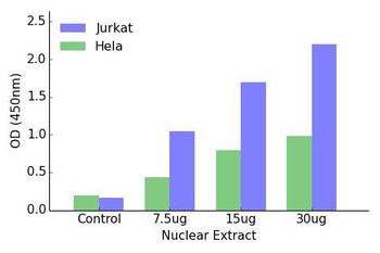 HOXB2 Transcription Factor Activity Assay
