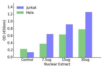 HOXD12 Transcription Factor Activity Assay
