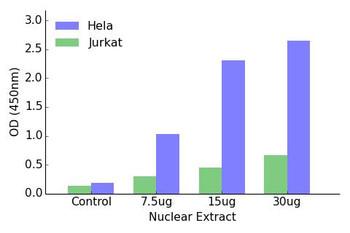 HOXD8 Transcription Factor Activity Assay