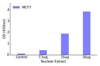 NR2F6 Transcription Factor Activity Assay