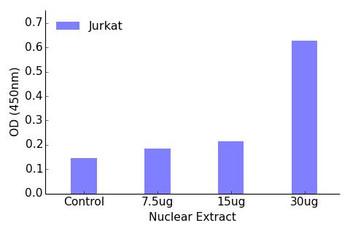 NRF1 Transcription Factor Activity Assay