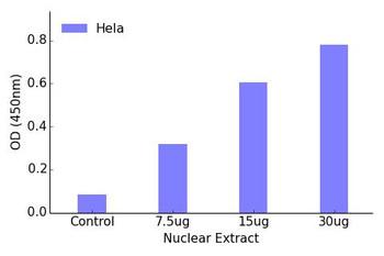 PPAR-gamma Transcription Factor Activity Assay