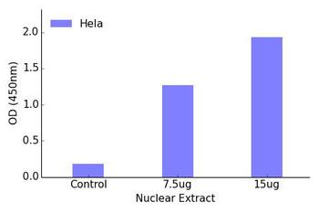 MEF2A Transcription Factor Activity Assay