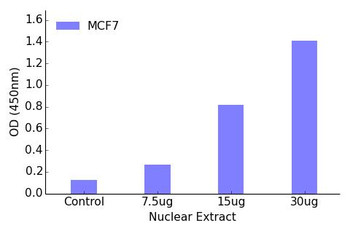Retinoic Acid Receptor beta Transcription Factor Activity Assay