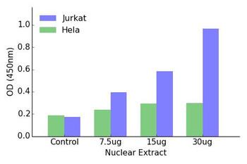 NR1I3 Transcription Factor Activity Assay