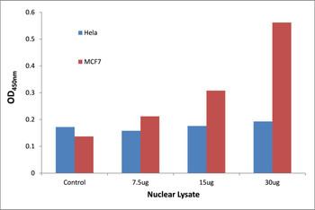 MYSM1 Transcription Factor Activity Assay