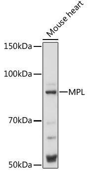 Immunology Antibodies 2 Anti-MPL Antibody CAB16715