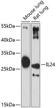 Cell Death Antibodies 1 Anti-IL-24 Antibody CAB1879