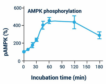 Signaling Pathway Assays AMPK Phosphorylation Assay Kit Fluorometric BA0075