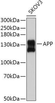 Cell Death Antibodies 1 Anti-APP Antibody CAB3161