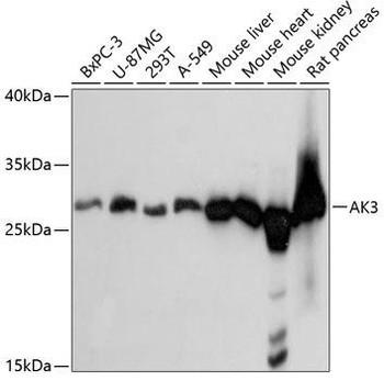 Signal Transduction Antibodies 2 Anti-AK3 Antibody CAB4694