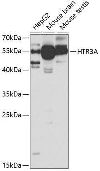 Signal Transduction Antibodies 3 Anti-HTR3A Antibody CAB5647
