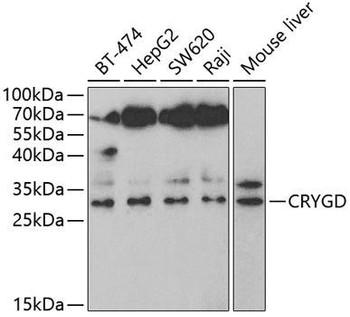Signal Transduction Antibodies 3 Anti-CRYGD Antibody CAB5740