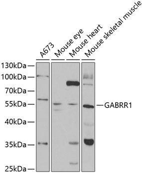 Signal Transduction Antibodies 3 Anti-GABRR1 Antibody CAB5745