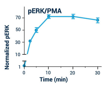 Signaling Pathway Assays ERK Phosphorylation Assay Kit BA0098