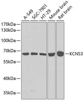 Signal Transduction Antibodies 3 Anti-KCNS3 Antibody CAB7906