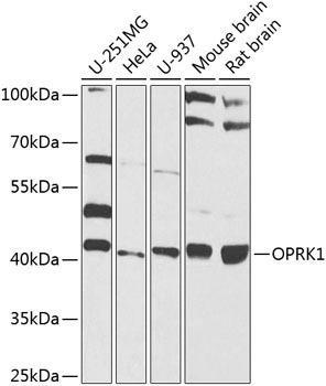 Developmental Biology Anti-OPRK1 Antibody CAB8306