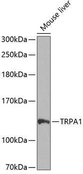 Signal Transduction Antibodies 3 Anti-TRPA1 Antibody CAB8568